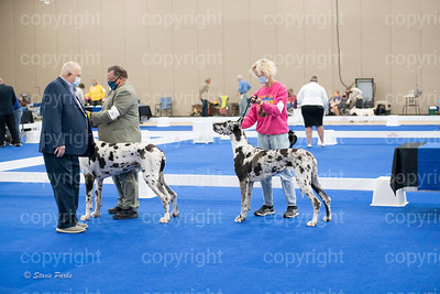 pups (81 of 534)
