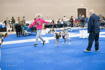 pups (88 of 534)