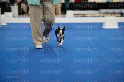 pups (283 of 534)