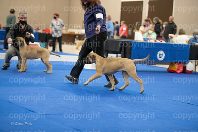 pups2 (192 of 783)