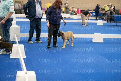pups2 (181 of 783)