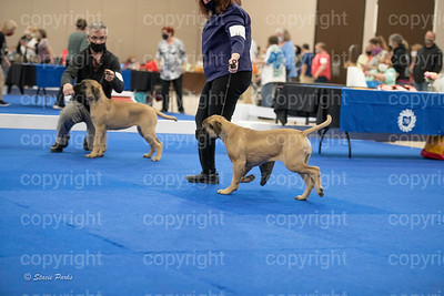 pups2 (193 of 783)