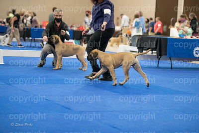 pups2 (194 of 783)