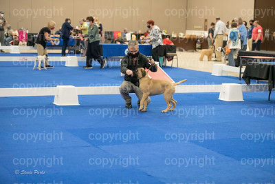 pups2 (183 of 783)