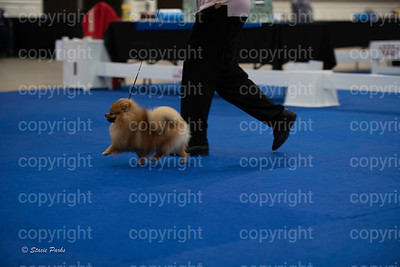 pups4 (18 of 435)