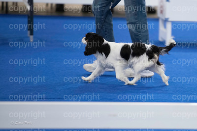 pups4 (311 of 435)