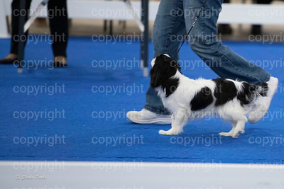 pups4 (313 of 435)