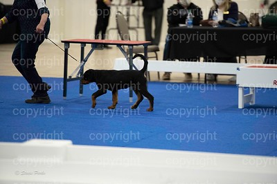 pups4 (226 of 435)
