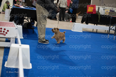 pups2 (208 of 783)