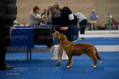 pups (317 of 534)
