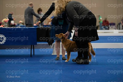 pups (313 of 534)