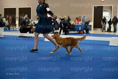 pups (318 of 534)