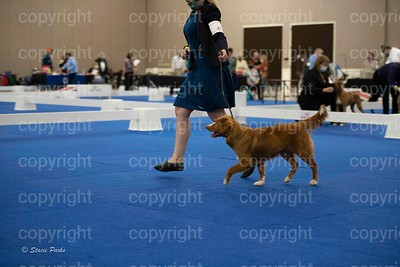 pups (322 of 534)