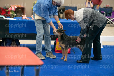 pups2 (104 of 783)