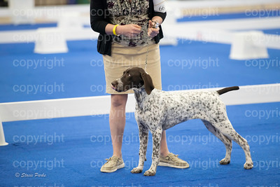 pups (98 of 534)