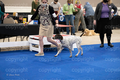 pups (106 of 534)