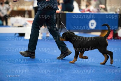 pups (364 of 534)