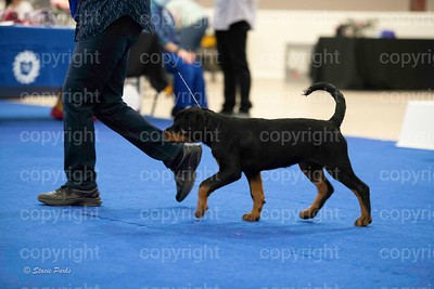 pups (361 of 534)