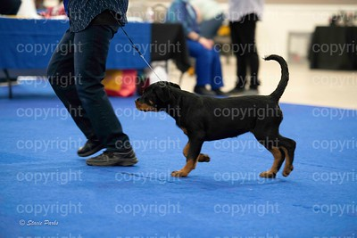 pups (362 of 534)