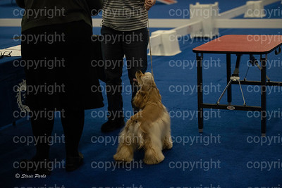 pups2 (97 of 783)