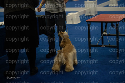 pups2 (96 of 783)
