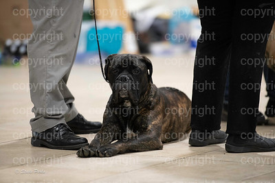 pups (142 of 534)