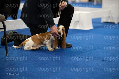 pups (119 of 534)