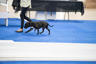 pups4 (136 of 435)