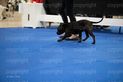pups (122 of 534)