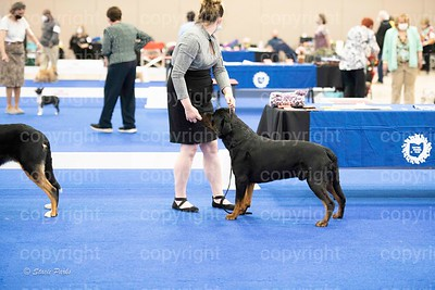 pups (467 of 534)