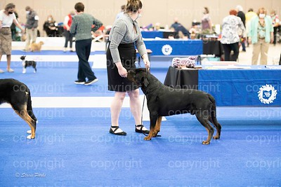 pups (469 of 534)