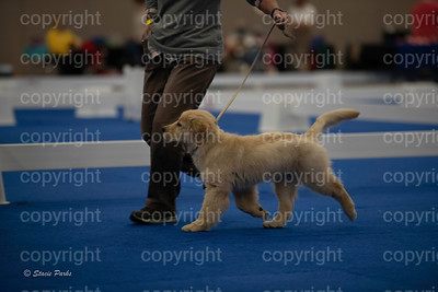 pups (179 of 534)