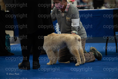 pups (152 of 534)