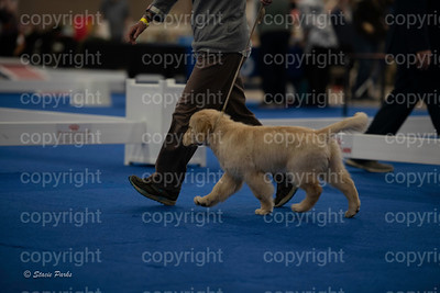 pups (169 of 534)