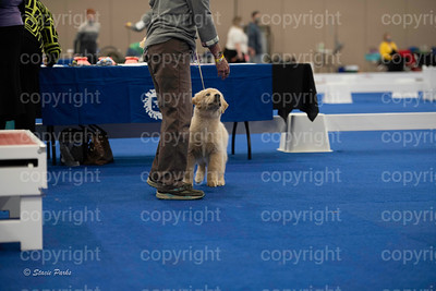 pups (159 of 534)