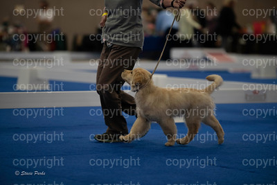 pups (174 of 534)