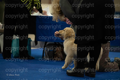 pups (157 of 534)