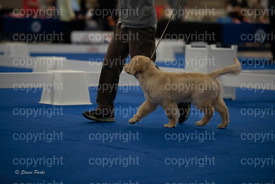 pups (172 of 534)