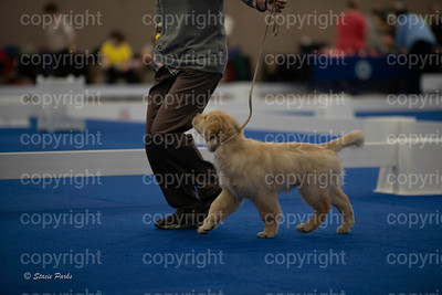 pups (177 of 534)