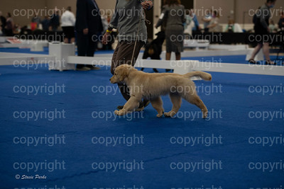 pups (161 of 534)