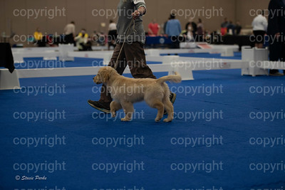 pups (168 of 534)