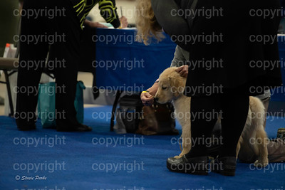 pups (154 of 534)