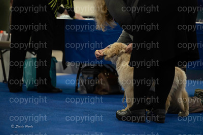 pups (155 of 534)