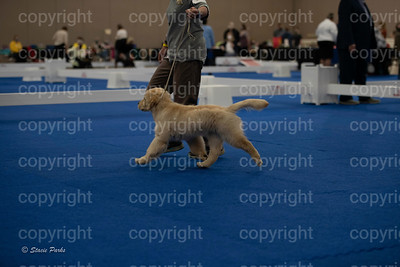 pups (167 of 534)