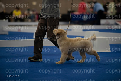 pups (176 of 534)