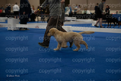 pups (160 of 534)