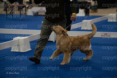 pups (184 of 534)