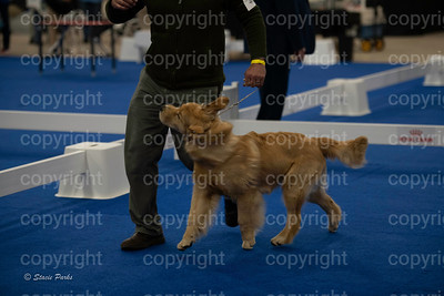 pups (185 of 534)
