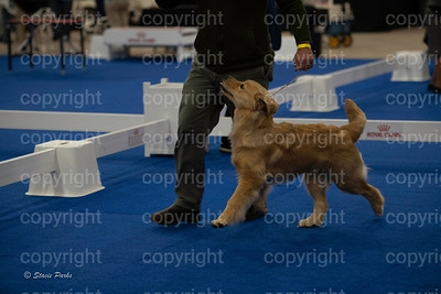 pups (183 of 534)