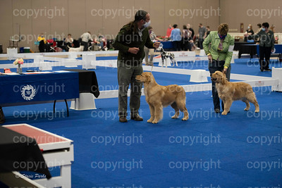 pups (232 of 534)